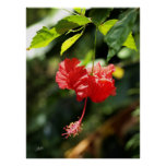 Botanicals 9b de Hawaii Posters