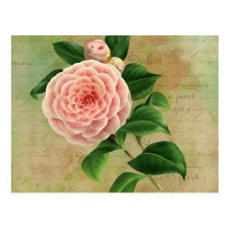 Botánico francés de la camelia del vintage tarjetas postales