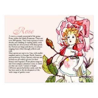 Botany Collector Vintage Rose Girl Plant Info Postcard