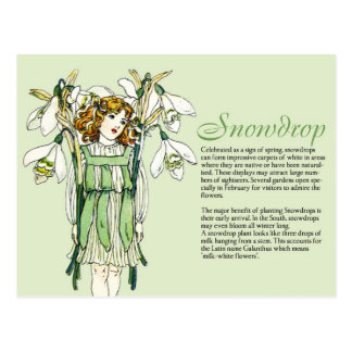 Botany Collector Vintage Snowdrops Girl Plant Info Postcard