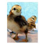Botas y amigos, polluelos tarjetas postales