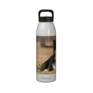 Botella de agua australiana del perro de pastor