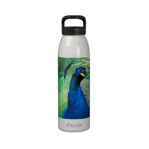 Botella de agua colorida del pavo real