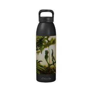 Botella de agua del bosque del helecho