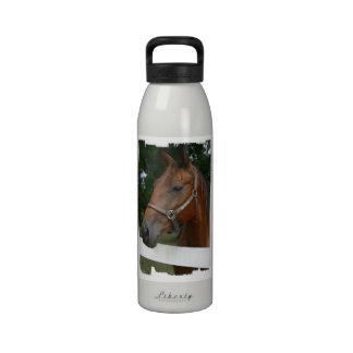 Botella de agua del caballo de la castaña dulce