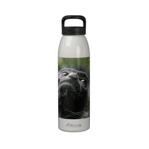 Botella de agua del mono de Colobus