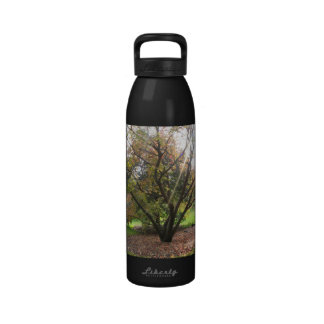 Botella de agua del otoño del rayo ligero del árbo