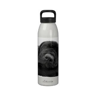 Botella de agua del perrito del laboratorio el dor