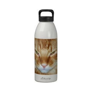 Botella de agua gruñona del gato de Coon de Maine