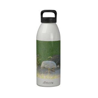 Botella de la libertad de las aves de Guinea Botallas De Agua