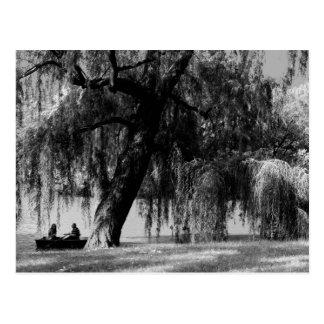 Botes de remos del Central Park Postales