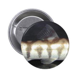 Botia Almorhae Buttons
