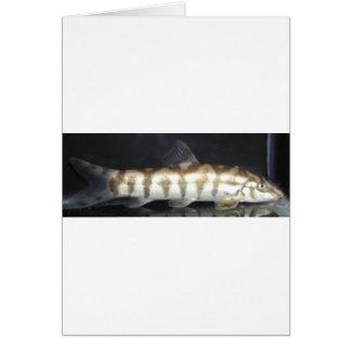 Botia Almorhae Greeting Card