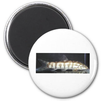 Botia Almorhae Fridge Magnets