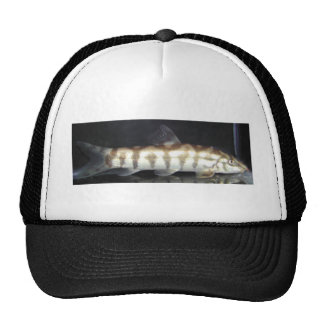 Botia Almorhae Trucker Hats