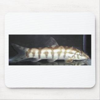 Botia Almorhae Mouse Pad
