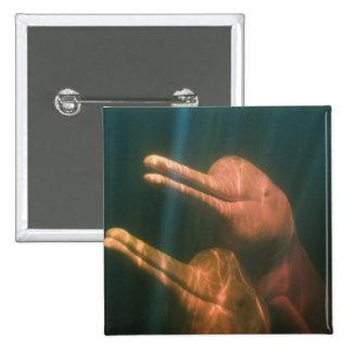 Boto or Amazon River Dolphin Inia geoffrensis Button