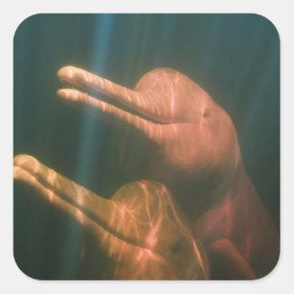 Boto, or Amazon River Dolphin (Inia geoffrensis) Square Sticker