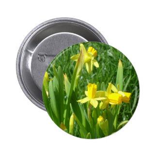 Botón amarillo de los narcisos del ranúnculo pin redondo de 2 pulgadas