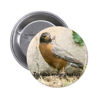 Botón americano del petirrojo pin redondo de 2 pulgadas