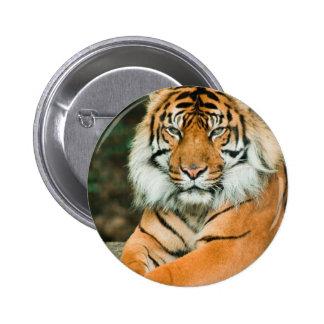 Botón anaranjado del tigre pin redondo de 2 pulgadas