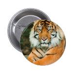 Botón anaranjado del tigre pins