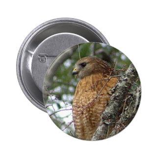 Botón atado rojo del halcón pin redondo de 2 pulgadas
