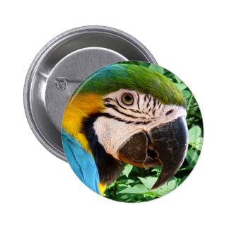 Botón azul del loro del Macaw Pin Redondo De 2 Pulgadas
