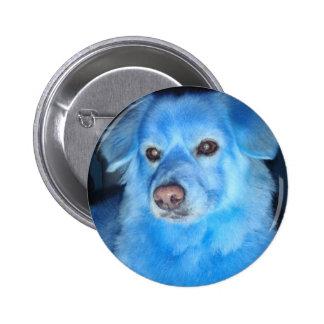 Botón azul del perro pins