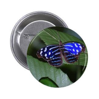 Botón azul y blanco de la mariposa pin
