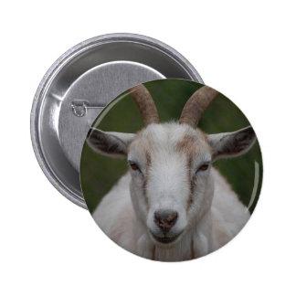 Botón blanco de la cabra pins