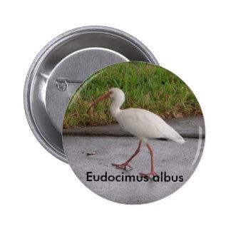 Botón blanco de la fauna del albus de Ibis Eudocim Pins