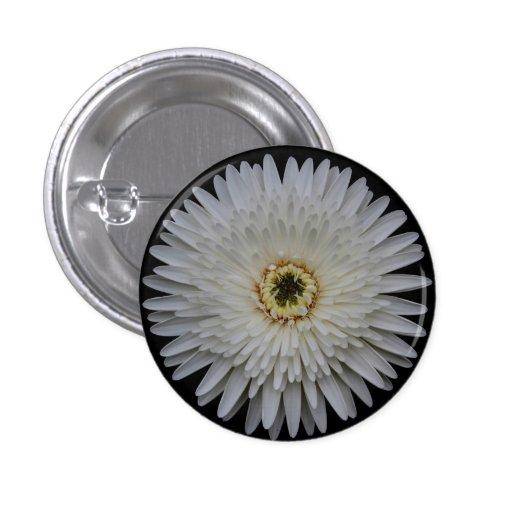 Botón blanco de la flor del Gerbera Pin