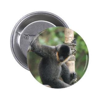 Botón blanco joven del mono del capuchón de Cheeke Pin