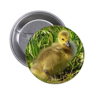 Botón canadiense 2 del ganso del bebé pin redondo de 2 pulgadas