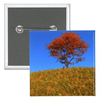 Botón claro del día del otoño pin cuadrado
