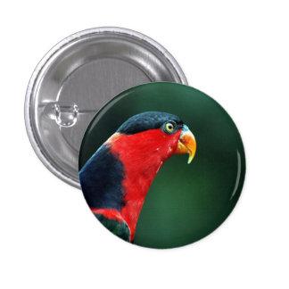 Botón colorido del pájaro