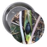 Botón combinado del escarabajo pins