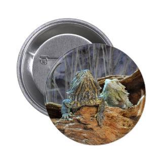 Botón con dos lagartos curiosos pin