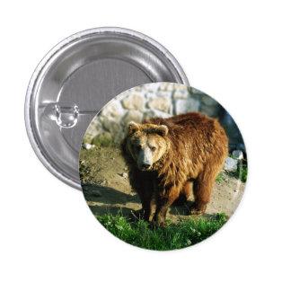 Botón con el oso marrón grande pin redondo de 1 pulgada