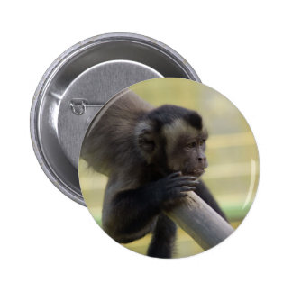 Botón copetudo del mono del capuchón pins