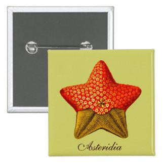 Botón cuadrado de Asteridia (estrella de mar) Pin