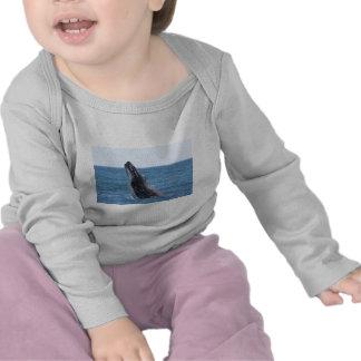 Botón cuadrado de Huggers de la ballena Camisetas