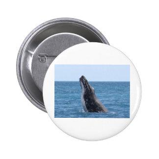 Botón cuadrado de Huggers de la ballena Pin