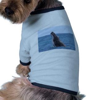 Botón cuadrado de Huggers de la ballena Camisa De Perrito