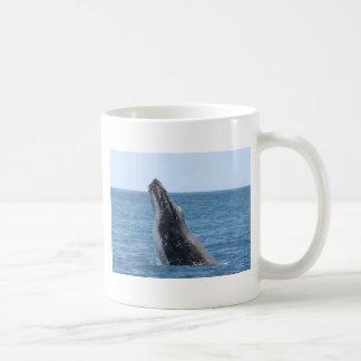 Botón cuadrado de Huggers de la ballena Tazas De Café