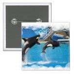 Botón cuadrado de las ballenas de la orca