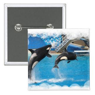 Botón cuadrado de las ballenas de la orca pin cuadrado