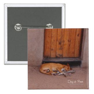 Botón cuadrado del perro en descanso pin cuadrado