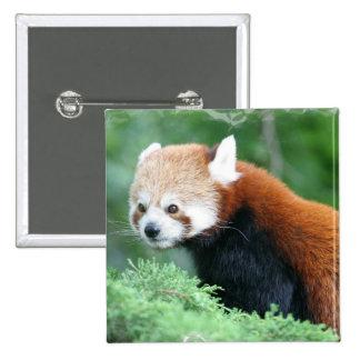 Botón curioso de la panda roja pins